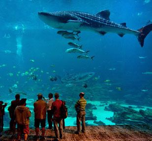 Georgia State Aquarium